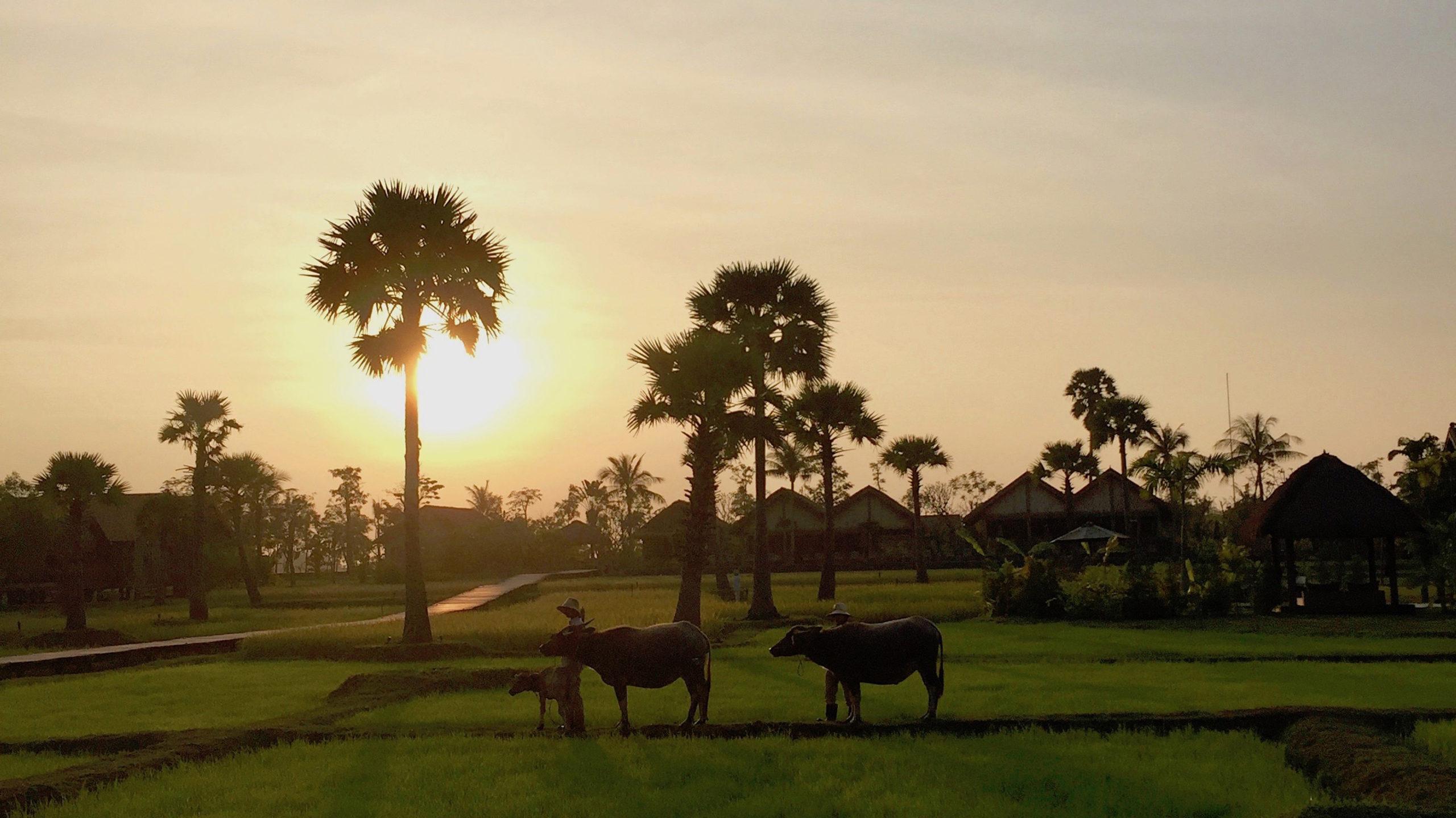 bestemming cambodja charmant mysterieus en luxe